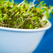 Stock Photo: AlfalfSprouts