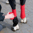Stock Photo: Bandaging horses