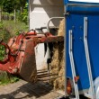 Preparing for the transportation of horse on a trailer. — Stock Photo #3480993