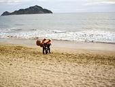 Mariachi musicians stroll to next venue — Stock Photo
