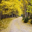 Stock Photo: Journey through aspens in Fall Colorado USA