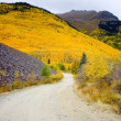 Pathway to Colorado hillside ablaze with yellow aspen — Stock Photo