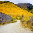 Stock Photo: Pathway to Colorado hillside ablaze with yellow aspen