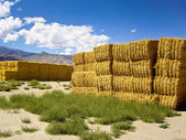 Haystacks in the high desert — Stock Photo