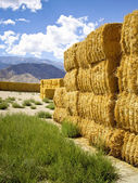 Golden Hay — Stock Photo
