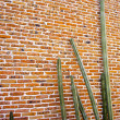 Tall Cacti against an old brick wall - Stock Photo
