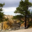 Stock Photo: Uprooted tree at Bryce Canyon