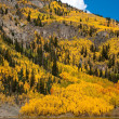 Colorado Fall Scenic — Foto Stock