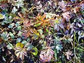 Folhas de outono geladas — Foto Stock