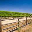 Grapevines of California — Stock Photo #27731345