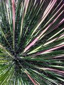 Curly Cacti — Stockfoto