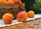 Apricots scattered on the towel — Stock Photo