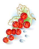Red currant bunch with leaf and dew drops — Stock Vector