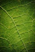 绿叶 — 图库照片