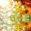 Beautiful colorful autumn leaves in the park — Stock Photo #12840210