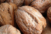 Walnuts in shell — 图库照片