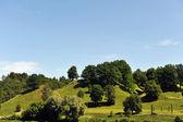 árvores na colina — Foto Stock