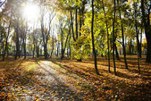 Leaf fall in park — Stock Photo