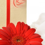 Present box with gerbera — Stock Photo