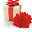 Present box with  gerbera - Stock Photo