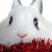 Rabbit with garland — Stock Photo
