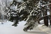 Winter landscape — Stockfoto