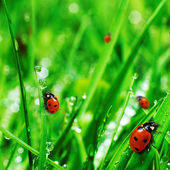 Fresh green grass with water drops — Photo