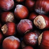 Hazelnut in shell — Stock Photo