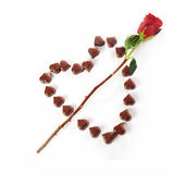Chocolate candies and rose — Stock Photo