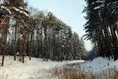 Winter landscape — Stok fotoğraf