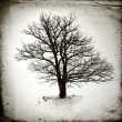 Stock Photo: Lone tree without leaves