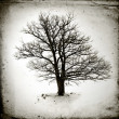 Lone tree without leaves  — Foto de Stock