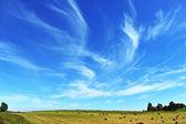 Harvesting hay — Stock Photo