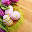 Easter eggs  and tulip — Stock Photo