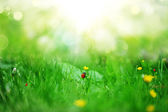 żółte kwiaty — Zdjęcie stockowe