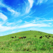 Cows on green meadow — Stock Photo #22940240