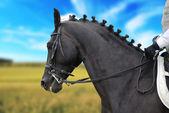 Hermoso negro caballo con jinete — Foto de Stock
