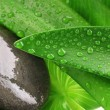 Stock Photo: Green leaf and grey stone