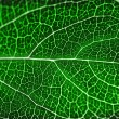 Textured green leaf - Stock Photo