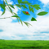 Green leaves on the twig — Stock Photo