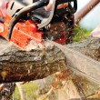 Chainsaw — Stock Photo #26027161