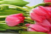 красные тюльпаны — Стоковое фото