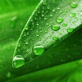 зеленый лист и воды падение — Стоковое фото
