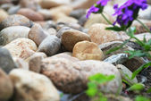 Different stones — Stock Photo