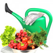 Watering can and vegetables. — Stock Photo #2760305
