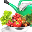 Watering can and vegetables. — Stock Photo #2887209