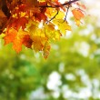 Autumn leaves — Stock Photo #31458507