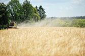 Colheita de grãos no campo — Foto Stock