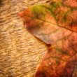 Leaf of maple — Stock Photo