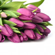 Stock Photo: Violet tulips